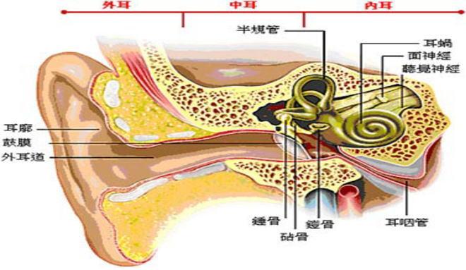 小儿鼻窦炎治疗方法_分泌性中耳炎的症状图片,分泌性中耳炎图片大全_分泌性中耳炎_39 ...