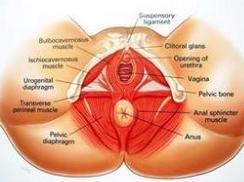 急性尿道综合征