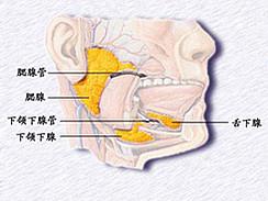 流行性腮腺炎