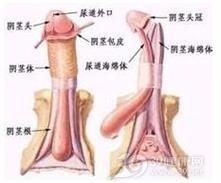 淋病合并症前列腺炎