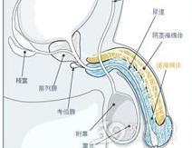 肝硬化男性性功能减弱综合征