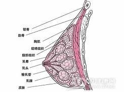 急性乳腺炎