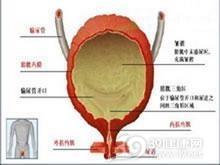 巨膀胱-小结肠-肠蠕动不良综合征