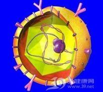 妊娠合并病毒性肝炎