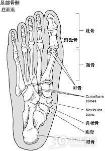 跖趾关节痛