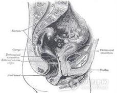 小儿神经源性膀胱