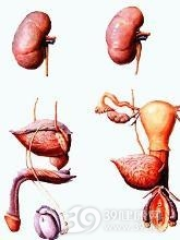 老年人泌尿系统感染
