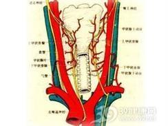 甲状腺功能亢进性肝病