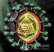丙型肝炎病毒感染与肾小球肾炎