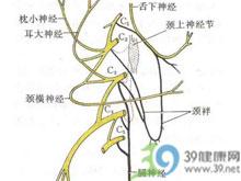 神经切断实验法的原理_坐骨神经的位置图