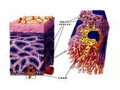 血清癌胚抗原