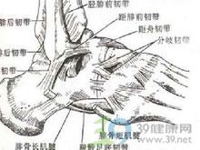 外踝前下方肿胀和疼痛
