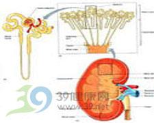 肾性骨质软化