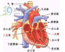 心尖部第1心音亢进