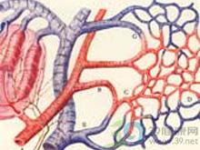 血管内凝血