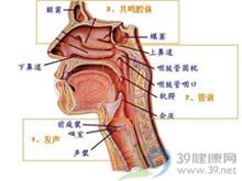 鼻粘膜肿胀