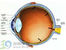 眼球调节功能减退或消失