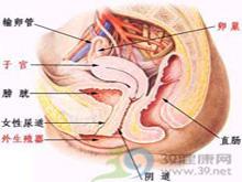 尿道黏膜外翻
