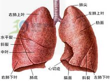 血浆胆固醇水平高