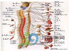 定位神经体征