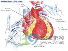 大动脉供血障碍
