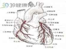心血管造影见双球征
