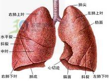 肺血流量很多