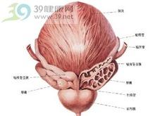 膀胱纤维化