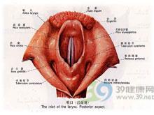白喉假膜形成