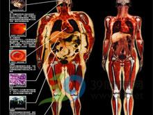 内脏性肥胖
