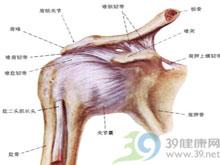 前臂及手部肌群的缺血性挛缩