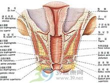 小阴唇及前庭也有散在的白色圆形及环形丘疹
