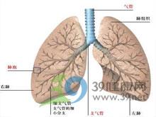 肺过度充气