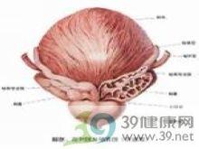 前列腺缩小变硬