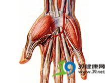 尺动脉或桡动脉搏动减弱和消失