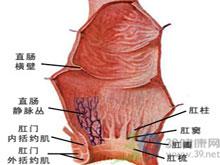 耻骨直肠肌痉挛性肥大