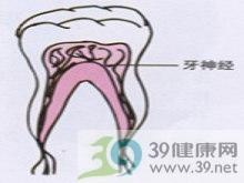 牙的咀嚼磨损