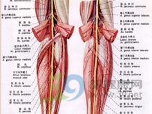 腘动脉搏动减弱或消失