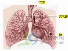 呼吸功能衰竭