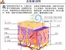 毛囊性呈鳞片状角化
