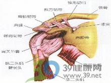 肩胛骨酸痛