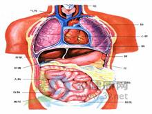 生理性腹泻