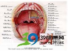 舌位于口腔底不能外伸