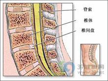 上颈髓区病变