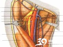 股三角区压痛