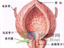 上尿路结构和功能损害