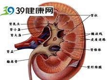 肾动脉阻塞