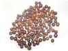 乌饭子(乌饭果、米饭果、纯阳子、土千年健果、冷饭果、沙汤果、蚂蚁果、小马扎豆)
